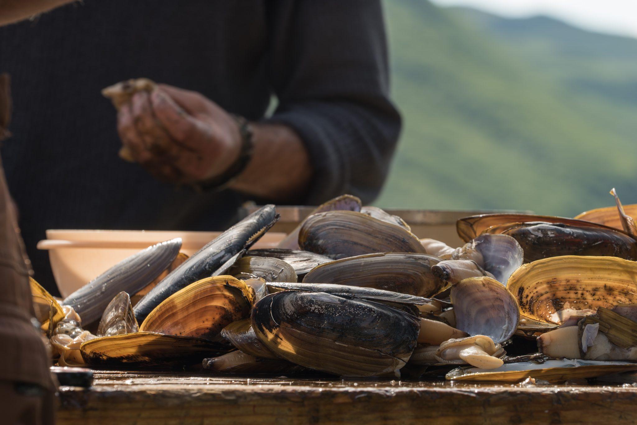 alaska-clamming-razor-clams-snug-harbor-DSC06692