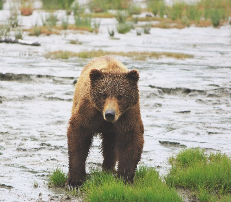alaskan bear viewing vacation