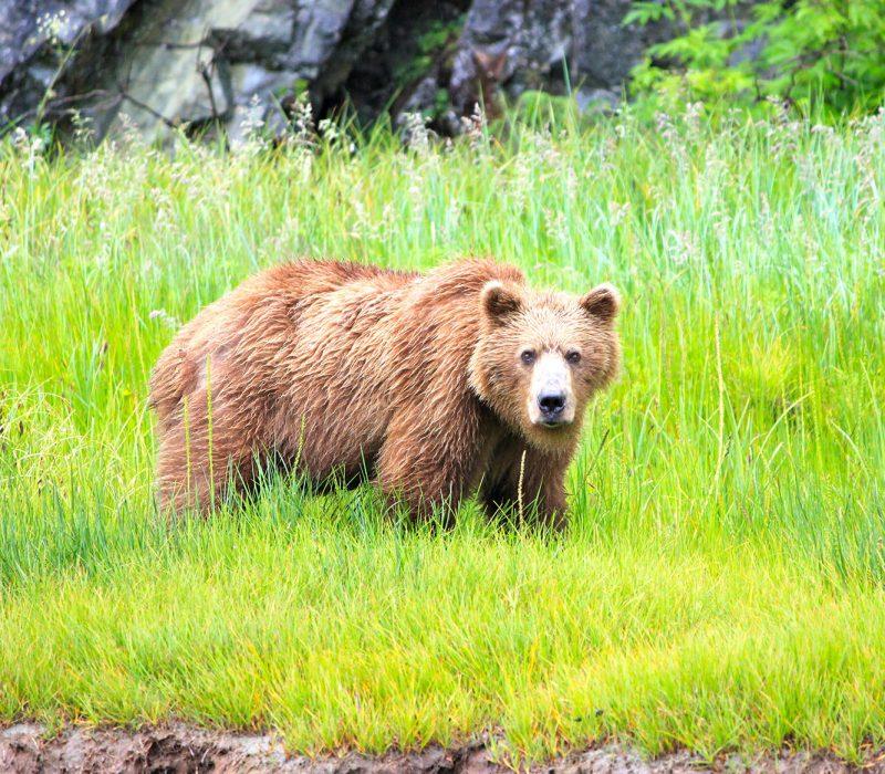 alaska adventure vacation packages bears