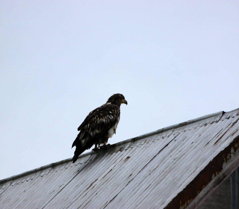 wildlife photography alaska