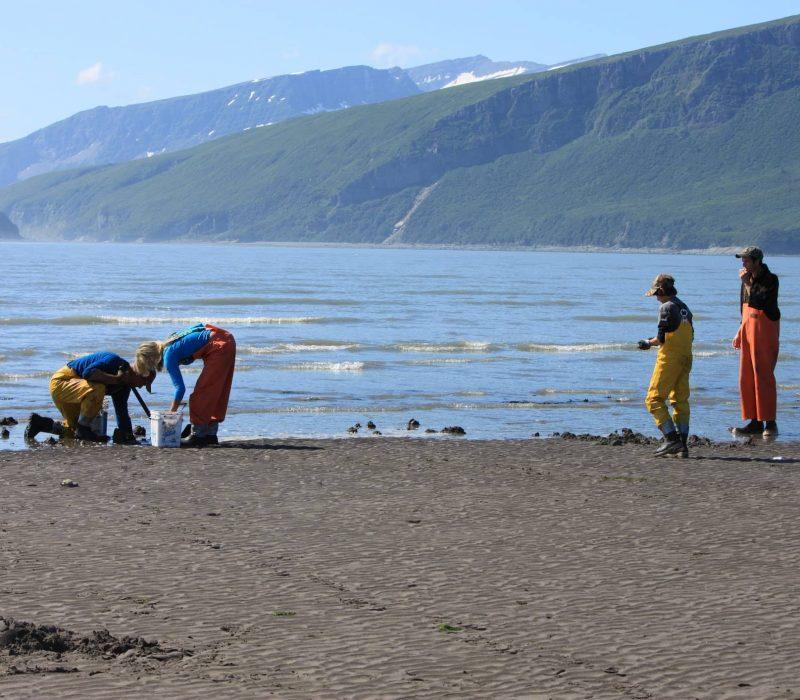 razor clam digging in alaska