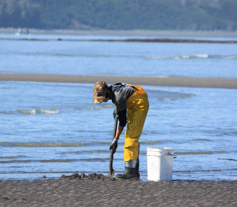 digging for clams in alaska