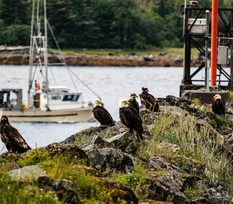 bird viewing in alaska