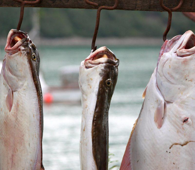 snug harbor fishing lodge