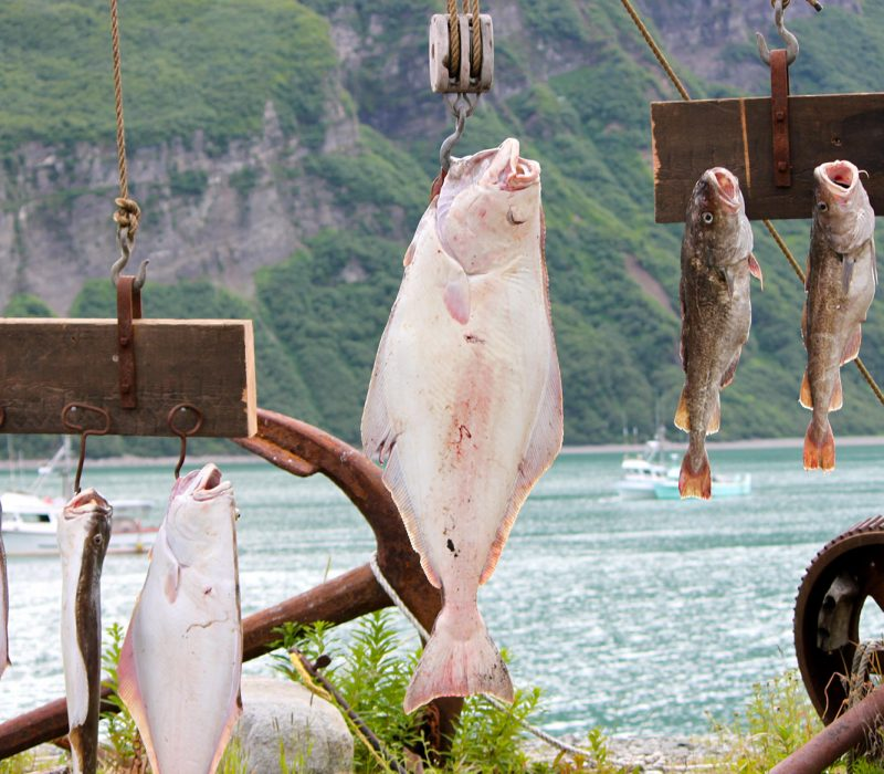 halibut and salmon fishing